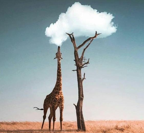 Zürafalar ve Beje – Buse Üçer
