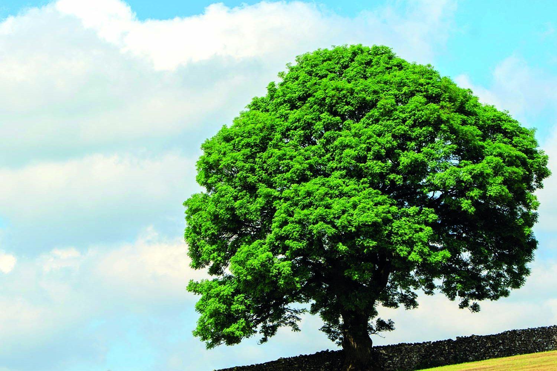 İdamlık Ağaç – Dilan Kılıç